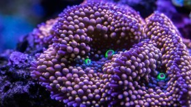 SeaWorld Committed to Combating Coral Reef Disease in Florida