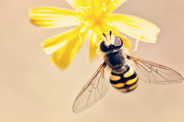 Insecticides Killing Bees Officially Banned by the European Union
