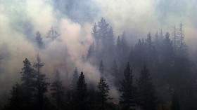 Manter Fire Burns Sequoia National Forest