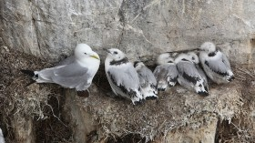 Visitors Enjoy The Wildlife At The Farne Islands