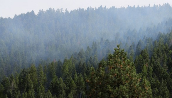 Montana Forests Struggle With Climate Change