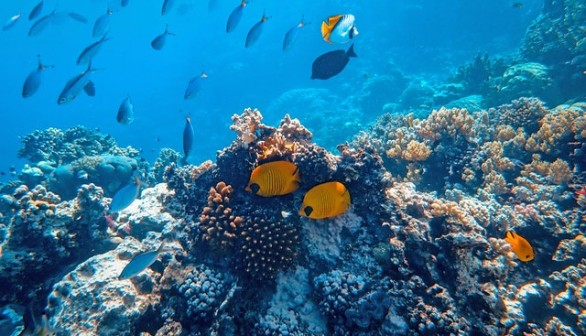 Coral reef fishes