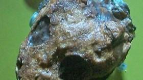 Micropholis stowi