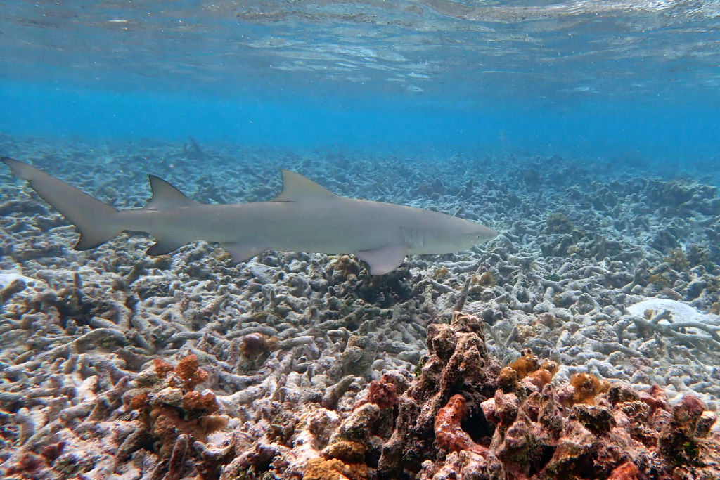 How are Coral Reefs Adapting to Survive the Changes in the Climate