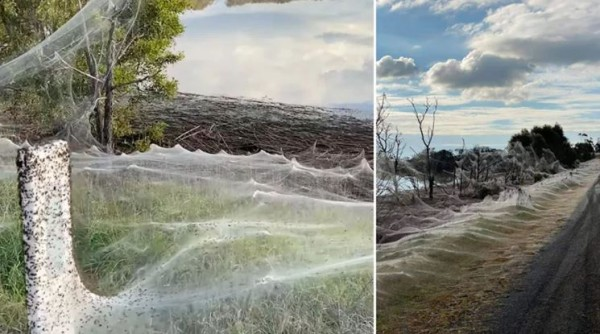 'Terrifying': Massive Spiderwebs Cover Entire Region in Australia After Floods