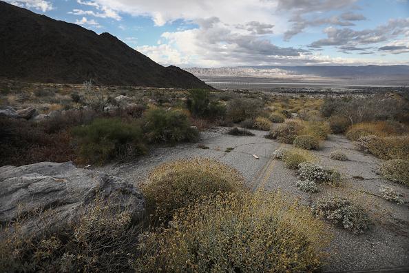 Plants in California's Desert