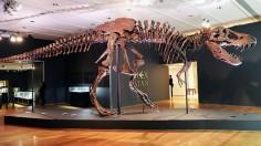Fossilized skeleton of a dinosaur