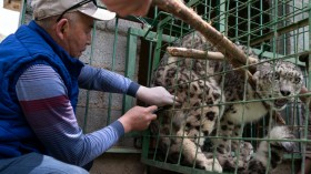 In Search Of The Elusive Snow Leopard In Kyrgyzstan