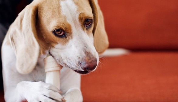 Essentials to Consider When Making Dog Food At Home