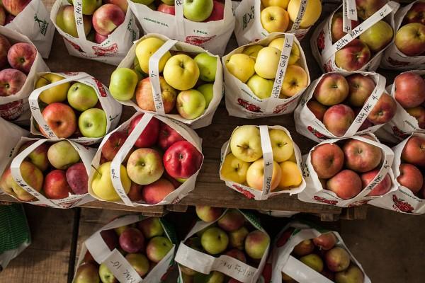Fall Harvest Season In Western Massachusetts