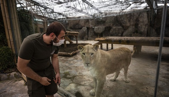 A lion and a man