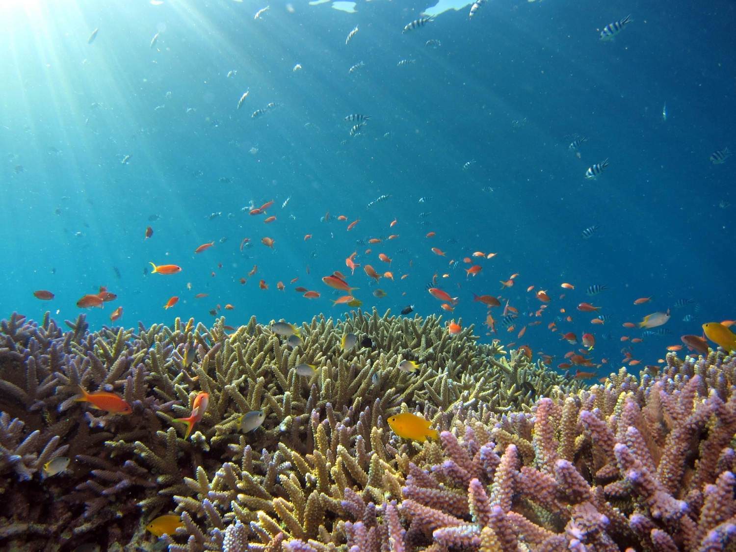 Earth's Coral Reefs in Great Danger Due to High Levels of CO2 Emission, Scientists Say