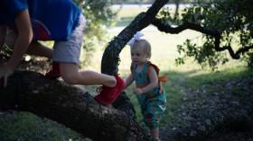 Baby Girl Climbing Tree