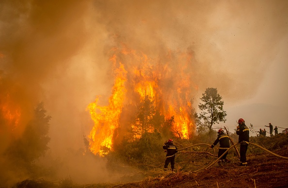 Firefighters using water hose to extinguish the burning blaze of a forest fire