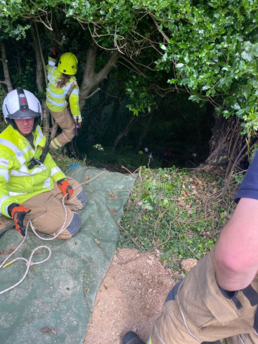 Heroic Cat Meows Nonstop Until Rescuers Found 83-Year-Old Owner Stuck in Ravine