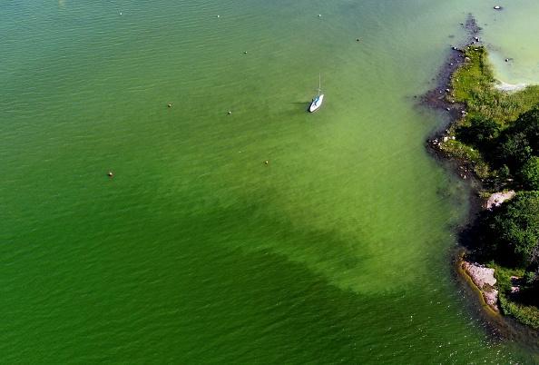 Algae Boom