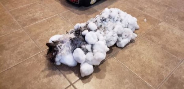 Cat Almost Unrecognizable After Being 'Frozen Alive' in Snow, Makes Miraculous Recovery!