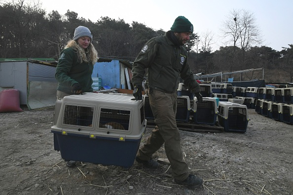 Evacuation of animals