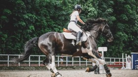 Equestrian Sports in the Olympics: Fun Facts