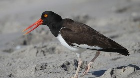Beak of birds can be useful in dissipating too much body heat