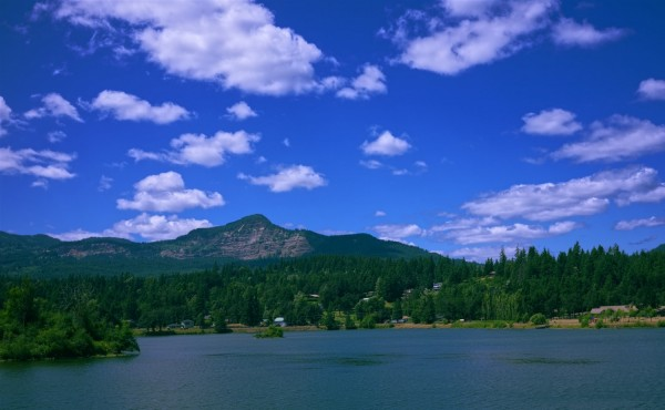 Lake surrounded with tall trees