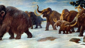 Wooly Mammoths