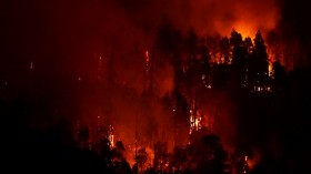 Giant Sequoia trees burning in the Sequoia National Forest
