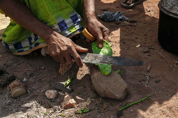 Woman prepares raketa (cactus) to eat with her daughter due to hunger