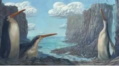 Kawhia Penguin - Artist's Interpretation