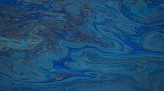 Oil floats in the water of the Talbert Marshlands
