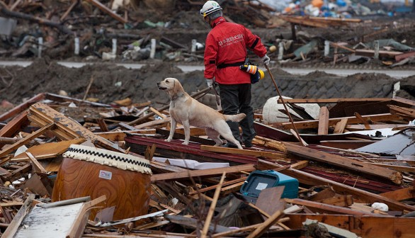 A team member from NPO Japan Rescue Dog