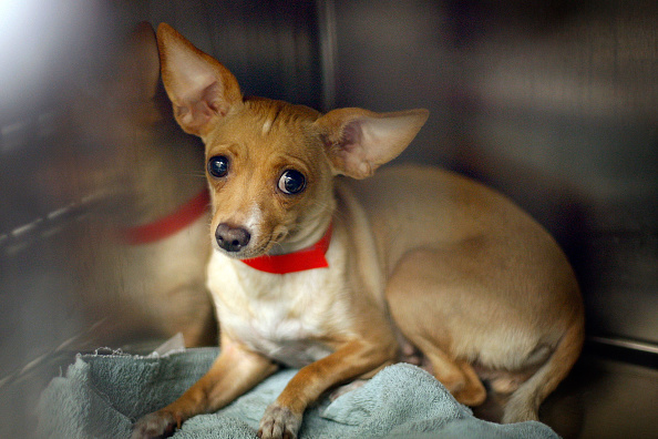 Dog waiting to be adopted at Animal Services Shelter
