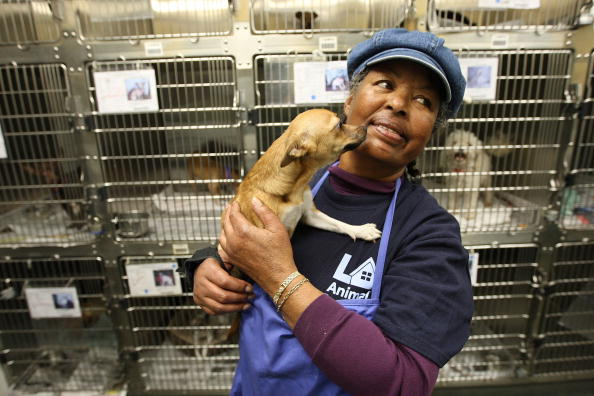 Shelter worker holding a dog that awaits adoption