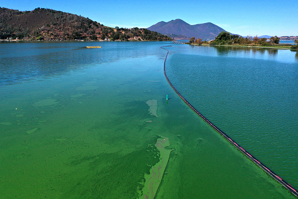 'Blue-green algae' can generate toxins that are capable of contaminating food webs and poisoning water supplies.