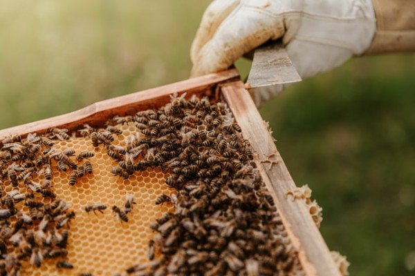 Basic Things You Should Know to Start a Beekeeping Business