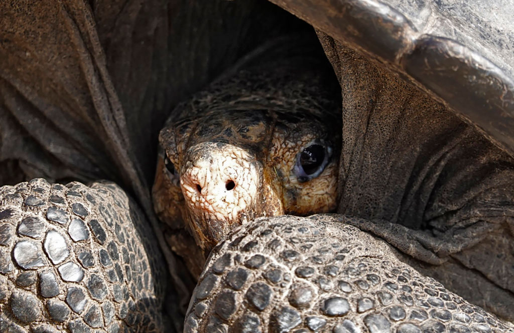 Caught on Cam: Researchers Horrifed as 'Vegetarian' Giant Tortoise Attacks and Eats Seabird