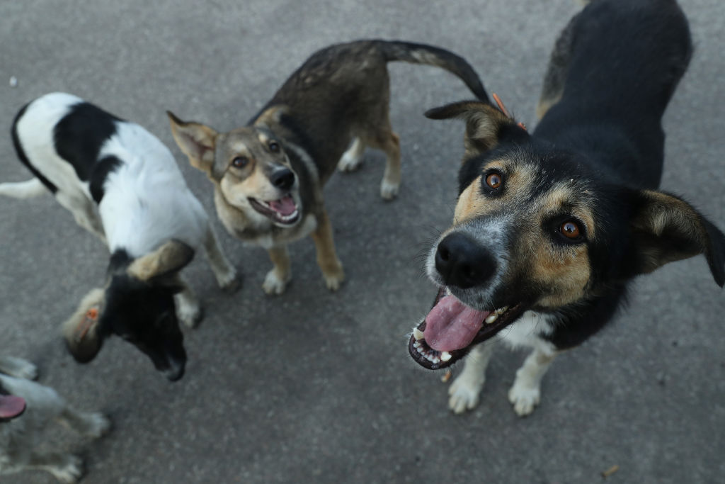 Vietnamese Dog Owners Devastated After Having 12 of Their Dogs Killed Over COVID