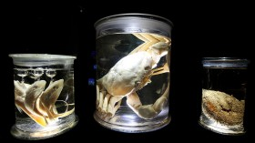 Deep Sea World Displayed At the Natural History Museum's Latest Exhibition