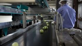 The FDA Focuses On Florida And Mexico In Tomato Salmonella Investigation