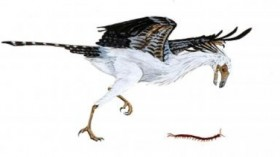 Jeholornis, an early bird from the early Cretaceous period