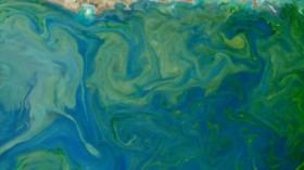 sea plankton