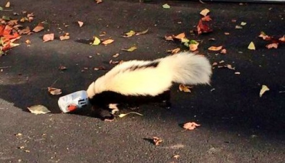 skunk in can