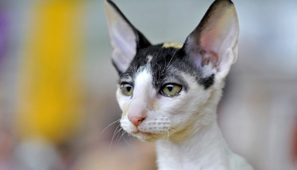Study on domestic cats revealed the secret life of the feline.