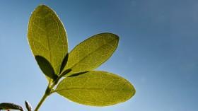 sunlight plant