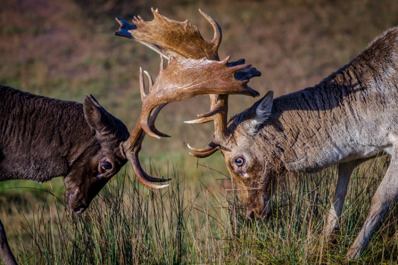 The Evolution of Competitiveness | Nature World News