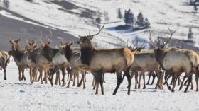 herd on frozen ground