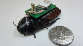 cockroach biobot