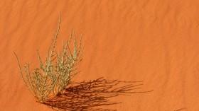 plant drought