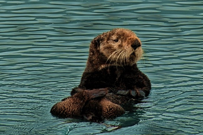 Indigenous Alaskan tribes' may not have eaten hunted sea otters thousands of years ago