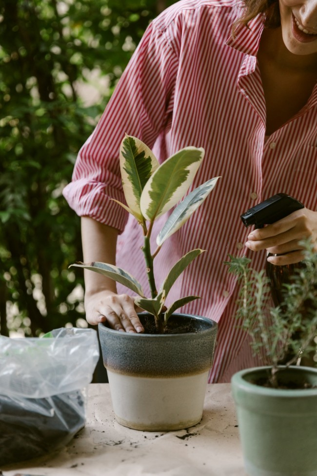 5 Air-Purifying Plants and Their Winter Care Tips